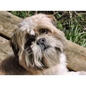 Domestic Animals / Pets