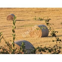 Grain